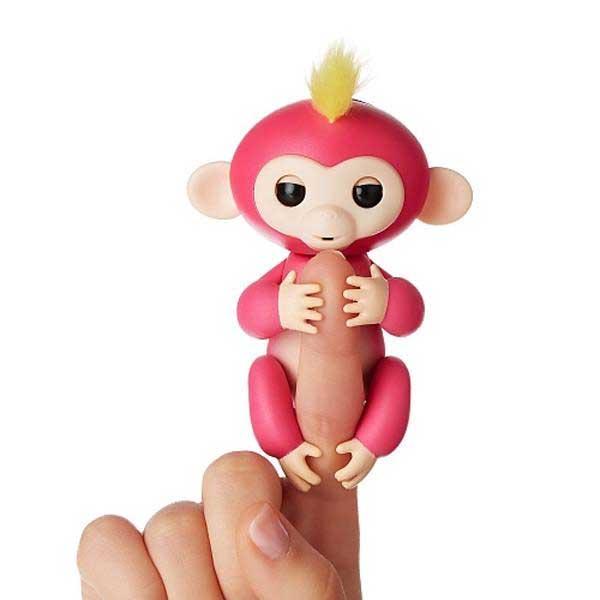 میمون ماکاک رزوس